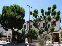 Girne'de ağaçların bakımı yapılıyor