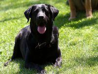 Cesur köpek sahibinin hayatını kurtardı
