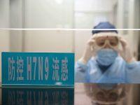 Çin'de yeni tür kuş gribi