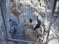 Kaçak etler hayvan barınağına verildi