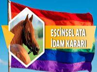 """""""Eşcinsel atı"""" idam ettiler"""
