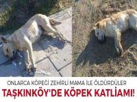 Taşkınköy'de köpek katliamı!