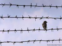 'Türkiye sığınmacılara karşı gizli cezaevleri kurdu'
