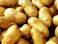 Patatesi buzdolabında saklamak zararlıymış