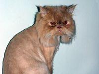 İran kedisi uzay yolcusu