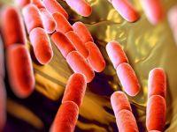 Bu bakteriyi hiçbir ilaç öldüremiyor!