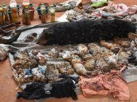 40 kaplan yavrusu cesedi bulundu!