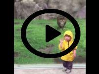 Yine hayvanat bahçesi, yine yalnız bir çocuk; bu kez aslan! Ama...