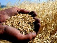 Tarım Dairesi'nden Alsancak'ta tarla günü ve gece eğitimi