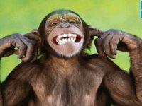 Maymunun genlerini manipüle ettiler