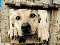 Kıbrıs'ın güneyinde köpek sahipleri için yeni yasa tasarısı!