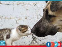 LTB Gençlik Meclisi'nden sokak hayvanları yararına etkinlik