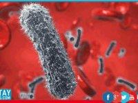 Hepatit C tarihe karışıyor!
