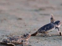 """""""Kaplumbağalarımız için sahillerimizi temizliyoruz"""""""
