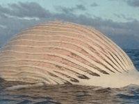 Okyanusta yüzen 'yaratık' herkesi hayrete düşürdü!