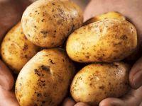 Patatesle ilgili beklenen duyuru geldi!