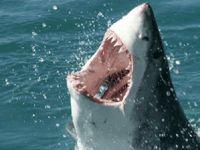Köpek balıkları kaç yıl yaşar dersiniz?