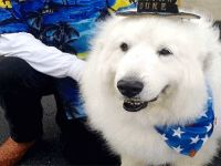 Köpek Duke belediye başkanlığı koltuğunu yine kaptırmadı