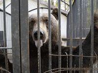 O ülke hayvanat bahçelerini kapatıyor!