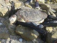 Larnaka'daki Balıkçılık Dairesi'nin kapısına ölü kaplumbağalar bırakılıyor