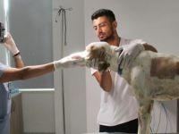 Yakın Doğu Üniversitesi Hayvan Hastanesi'nden Hayvanlara 7/24 Hizmet...