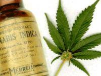"""Evde """"Kannabis Yağı"""" nasıl yapılır?"""
