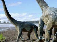 'Kıtaları aşan' dev dinozorlar bulundu