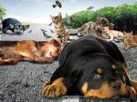 Sokak Hayvanlarına kim sahip çıkacak?