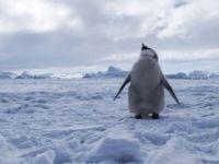 Antarktika suları dünyanın en geniş koruma alanı oldu