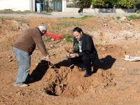 160 Fıstık çamı toprakla buluştu