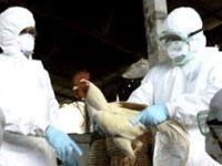 Kızarmış ördek satan kişi, H7N9 virüsü nedeniyle yaşamını yitirdi