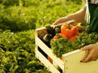 Organik tarım yapmak isteyen üreticilerden başvuru kabul ediliyor