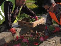 Girne'de çiçek ekimi sürüyor
