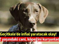Mağusa'da köpek öldüren cani tutuklandı