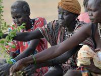 Güney Sudan'da köy halkı ağaç yapraklarıyla besleniyor