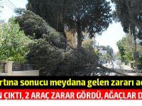 PGM açıkladı: Lefkoşa'daki korulukta yangın çıktı