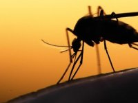 'Tarihi bir olay': Dünya Sağlık Örgütü, ilk sıtma aşısına onay verdi