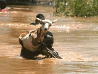 Kenya'da sel felaketi