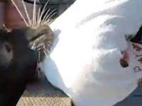Deniz aslanı küçük kızı az daha öldürüyordu