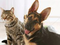 Türkiye'de Pet shop'ta kedi ve köpek satışına yasaklanıyor, sokağa atana da para cezası geliyor'