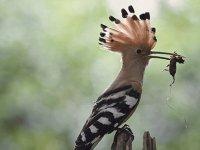 Güney Kıbrıs'ta, 39 kuş türü Avrupa kriterlerine göre tehdit altında