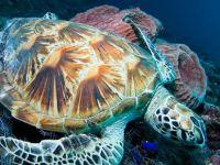 Akdeniz'deki deniz yaşamının korunması