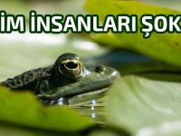 Kalbi görünen 'cam kurbağa' bilim insanlarını şaşırttı