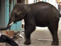 Sri Lanka'da filin saldırdığı Budist rahip öldü