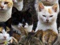 Çin'de yüzlerce kedi yemek olmaktan son anda kurtarıldı