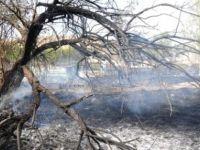 Larnaka'da dağlık bölgede yangın...