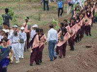 Dünya rekoru: Hindistan'da 12 saatte 66 milyon ağaç dikildi
