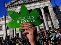 Uruguay'da eczanelerde yasal marihuana satışı başladı