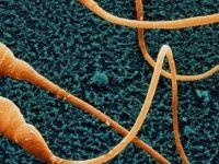 'Sperm sayısının mevcut oranda azalması insanlığın sonunu getirebilir'