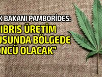 Kıbrıs'ın güneyinde 'tıbbi Marihuana' üretimi yasa tasarısı onaylandı